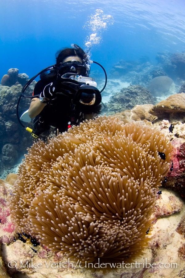 Photographer and Magnificent Anemone