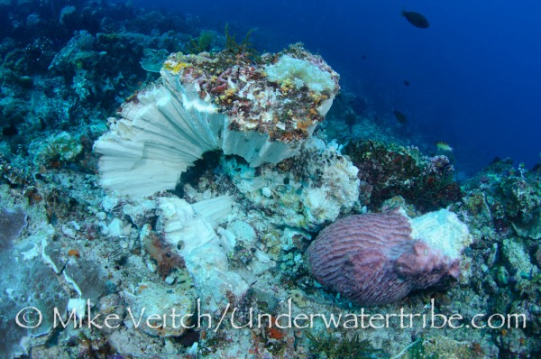 Bombing is just one Threat to Coral