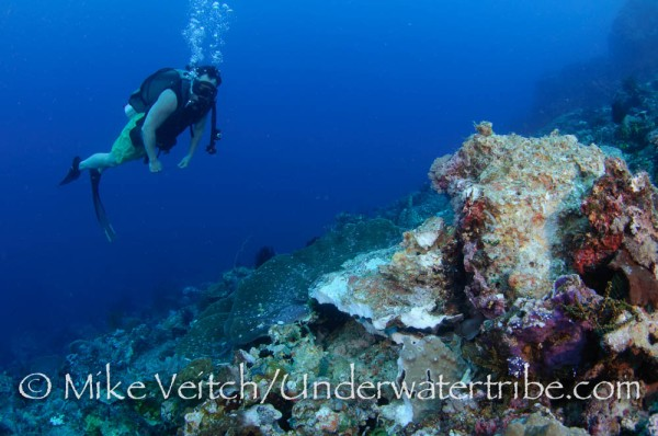 Diver Inspects Bomb Damage