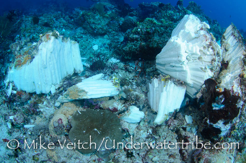 Hard Coral and Sponges Destroyed