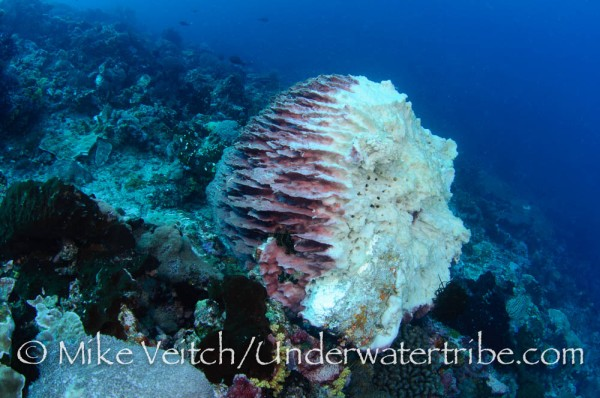 Barrel Sponge Destroyed