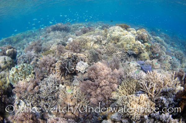 Beautiful Hard Corals