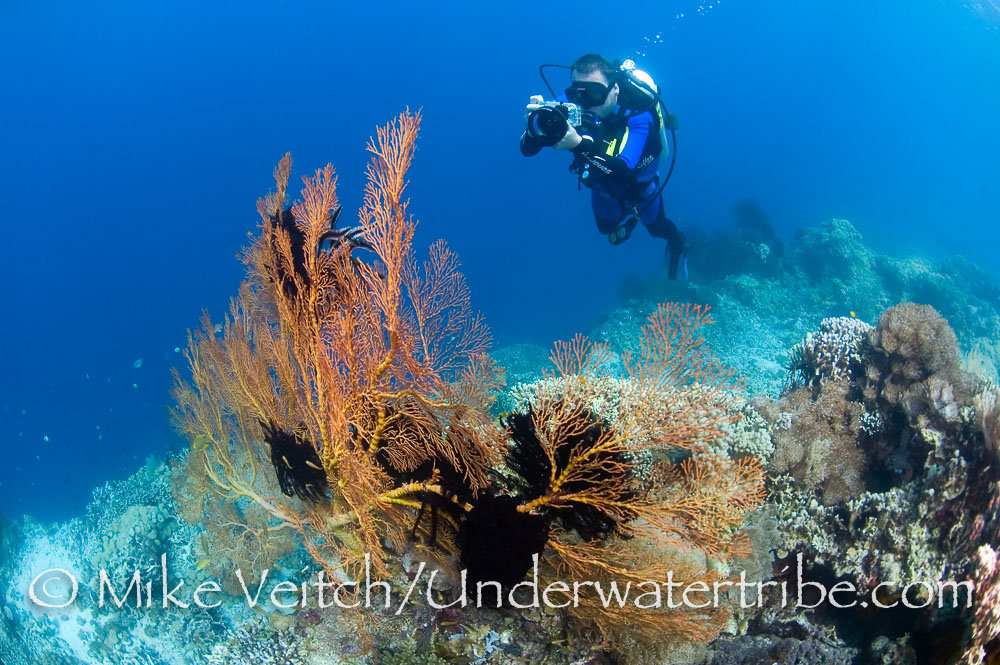 Sea Fan and Photographer
